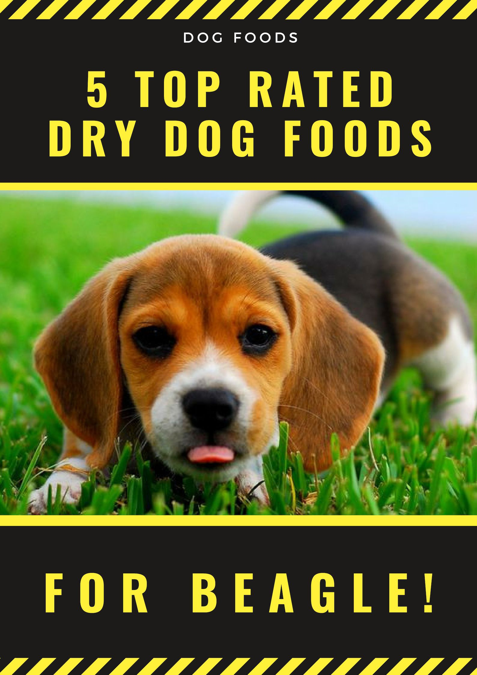 Kibble Or Dry Dog Food Makes It Easier For Beagle Owner That It