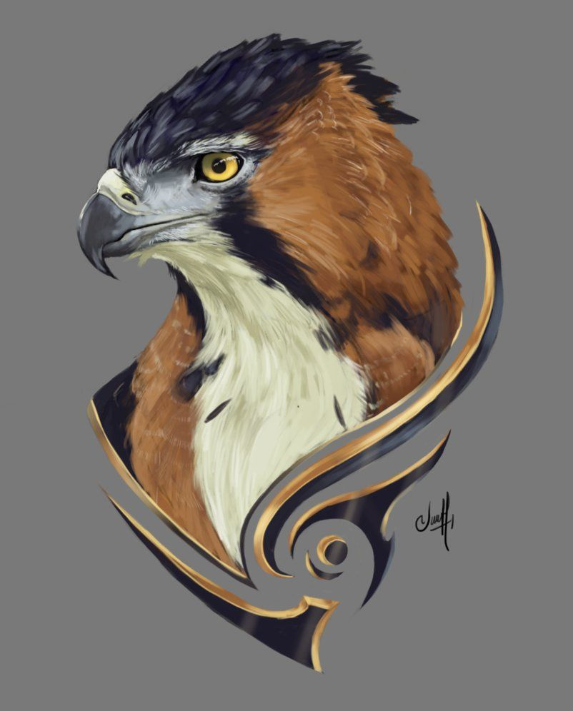 Ornate Hawk Eagle Animal Art Animal Sketches Eagle Drawing