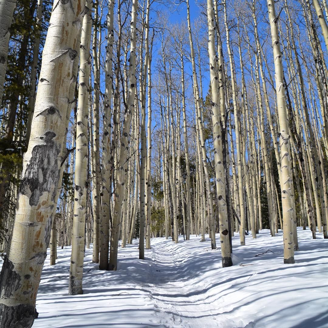 The trail ahead    Snowshoeing in Crested Butte, Colorado  What's