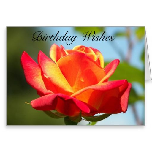 Review birthday rose greeting card we provide you all shopping site review birthday rose greeting card we provide you all shopping site and all informations in our m4hsunfo