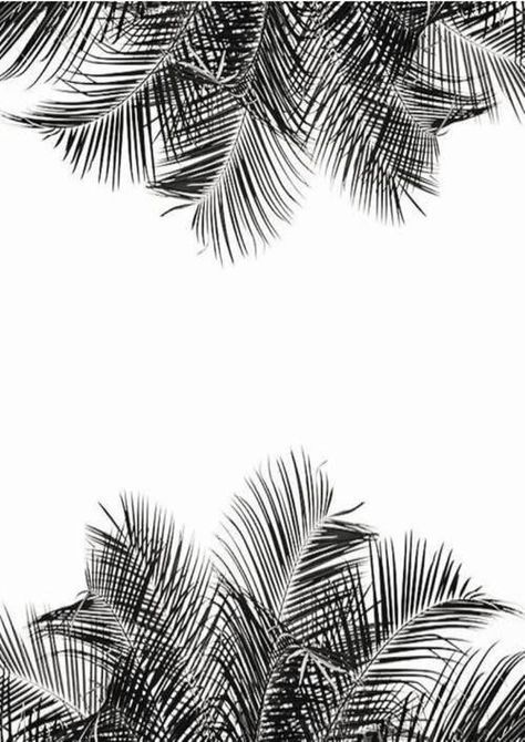 Palms 杂 Plant Wallpaper Pattern Wallpaper Tree