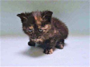 FOSTER CARE 9/13/17 3 week old kitten needs help