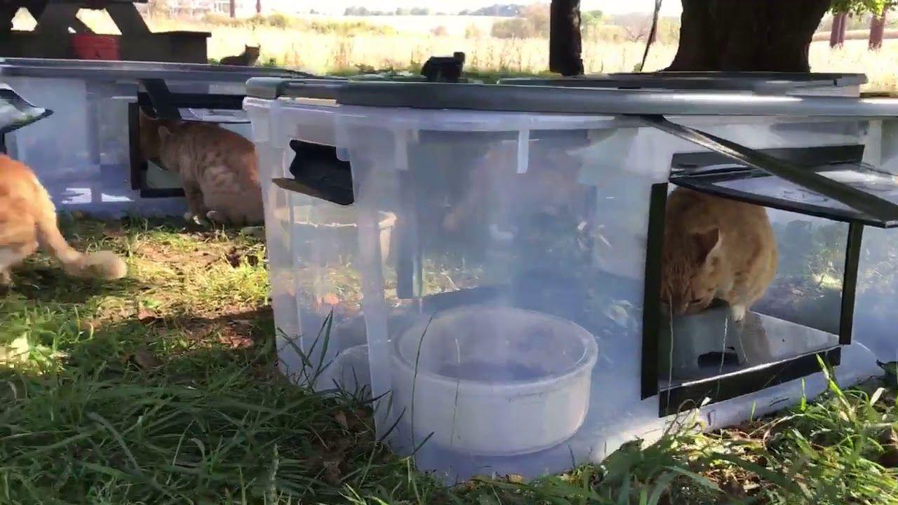 DIY Feeding station for outside/feral cats. Cat feeding