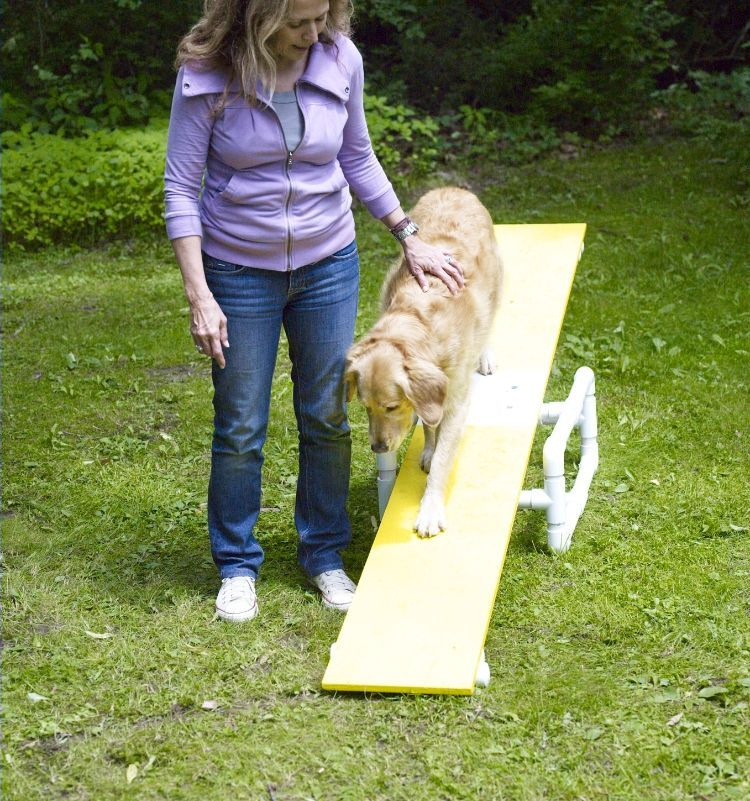 Agility Parcour Diy Hundeparcour Selber Bauen Wippe