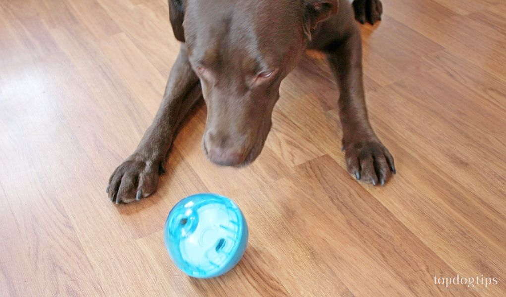 Review Our Pets Iq Treat Ball Dog Toy Homemade Dog Toys Best