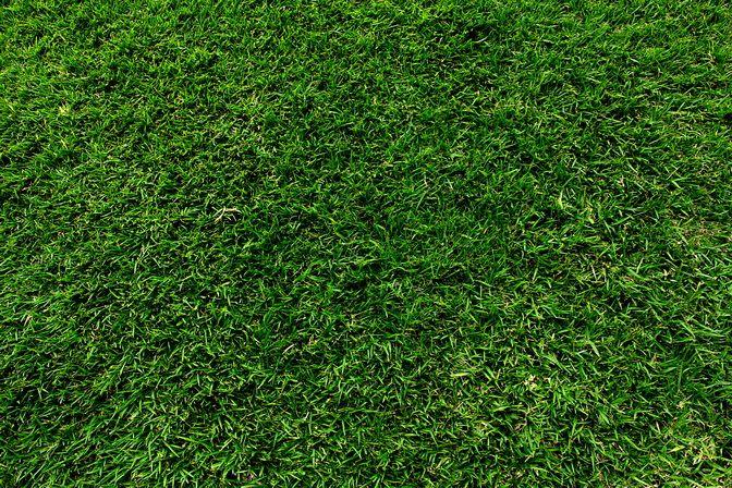 Grass Texture Centipede Grass Shade Grass Types Of Grass