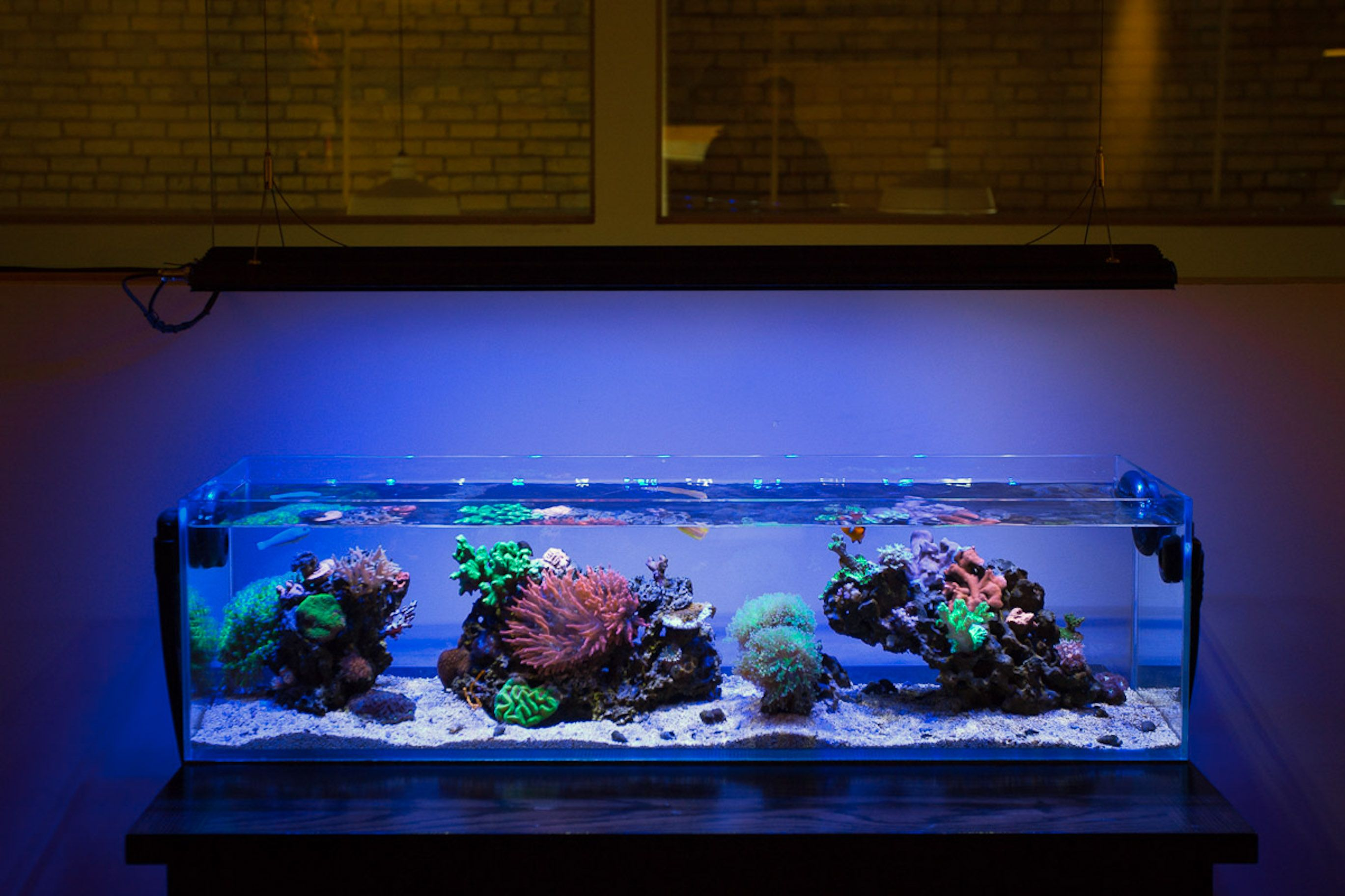 Long Reef Tank Aquascape Ideas