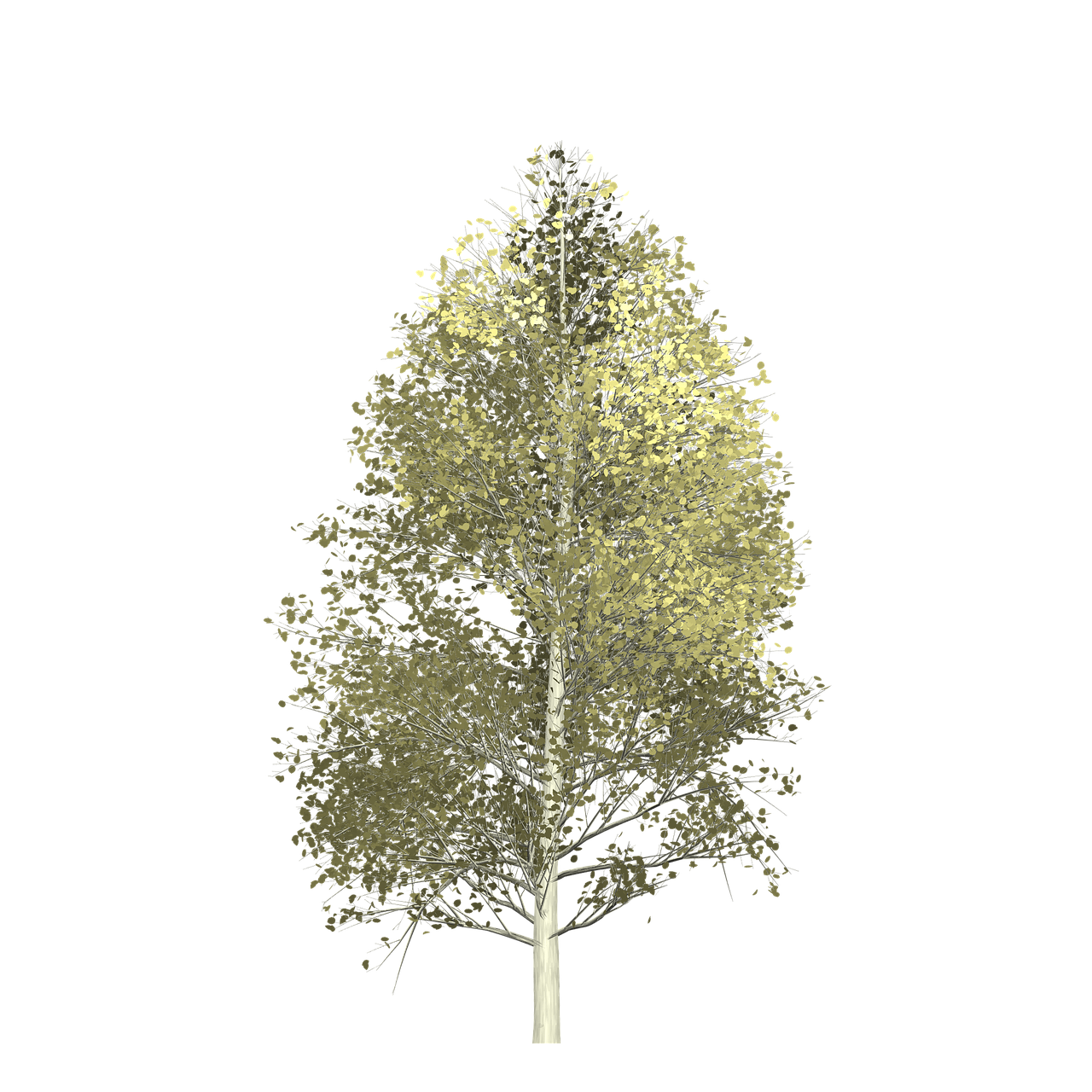 Forest, Aspen, Tree, Painted Tree, Nature forest, aspen