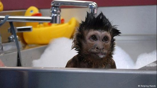 #engelliler #engelli #maymun #yardımcı #maymun Engelliler İçin Yardımcı Maymun