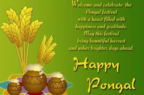 Happy Pongal Festival 2017 Wishes, Images, Quotes, SMS, Status | Happy  pongal wishes, Happy pongal, Happy sankranti