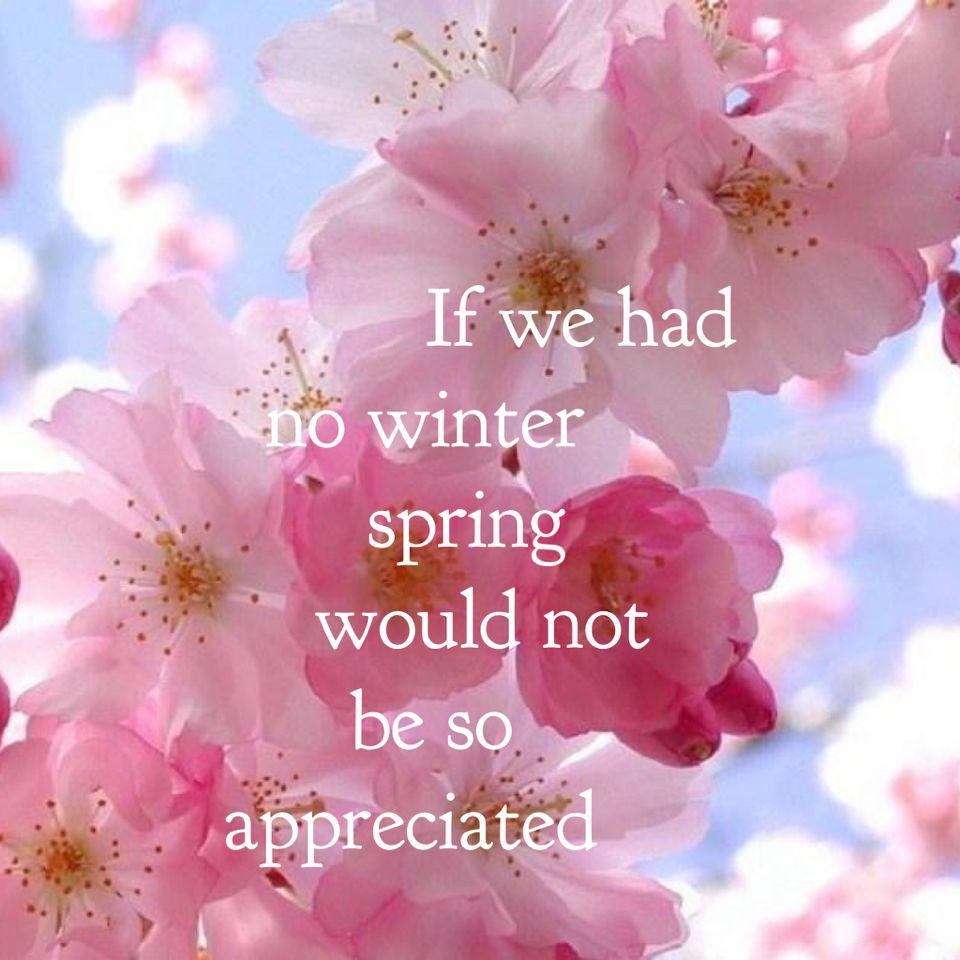 Looking forward to blossoms | spreuken | Pinterest