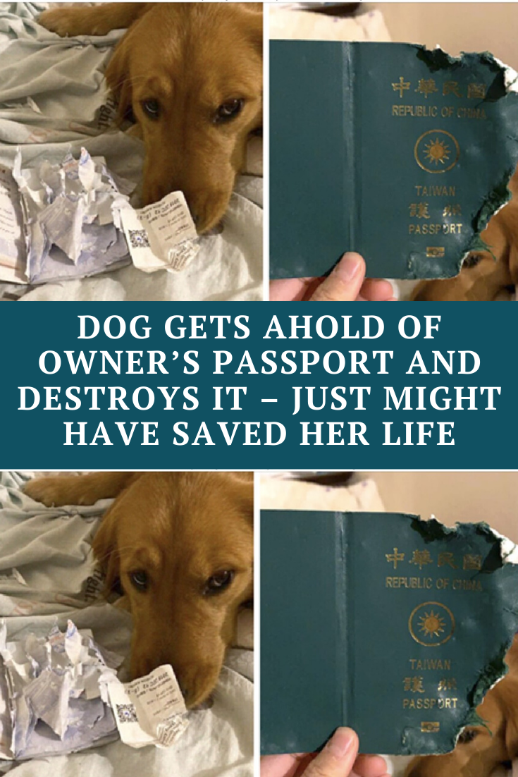 Dog Gets Ahold Of Owner S Passport And Destroys It Just Might Have Saved Her Life In 2020 Wtf Funny Awkward Funny Wtf