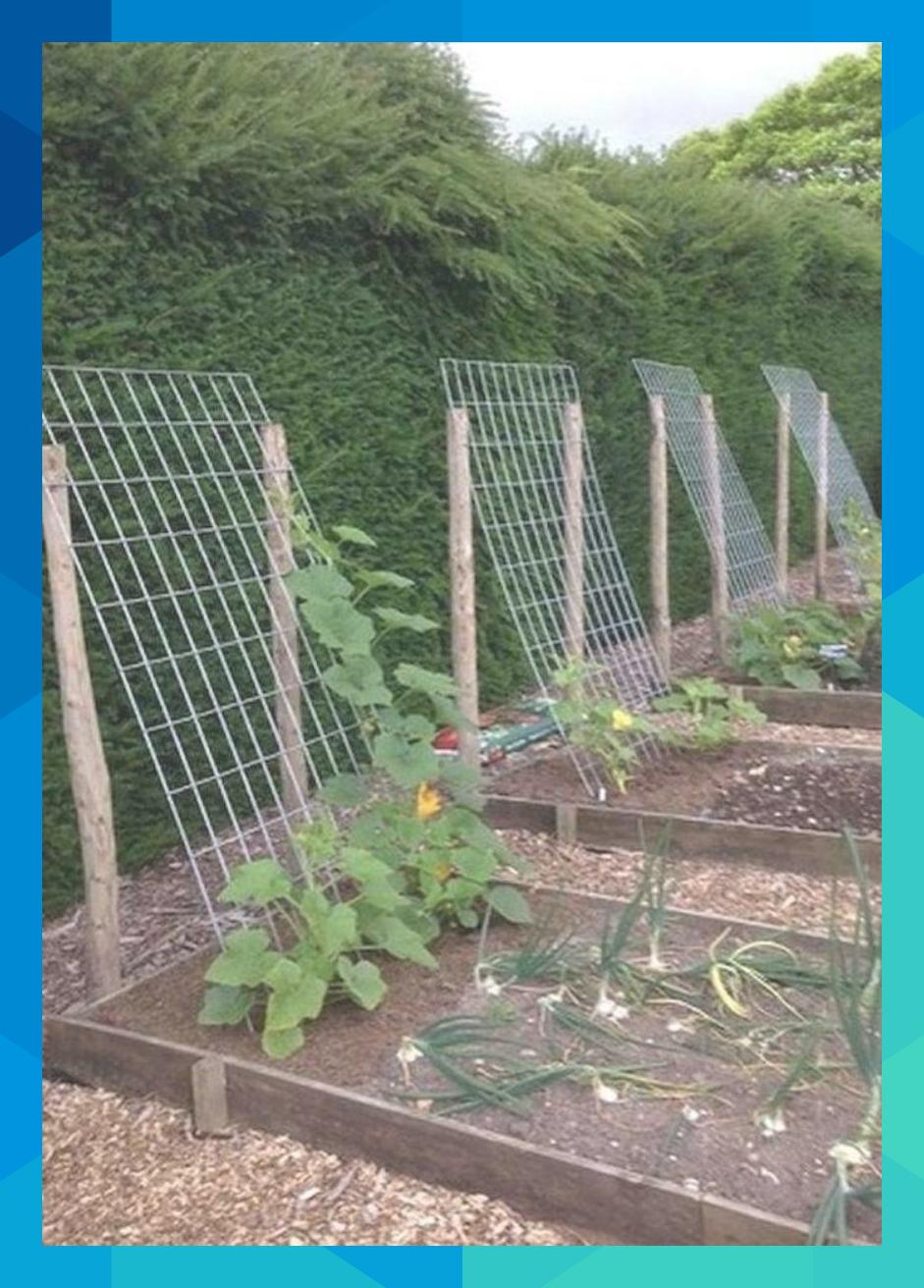 Small Space Vegetable Gardening #uptonroy140   Vegetable ...