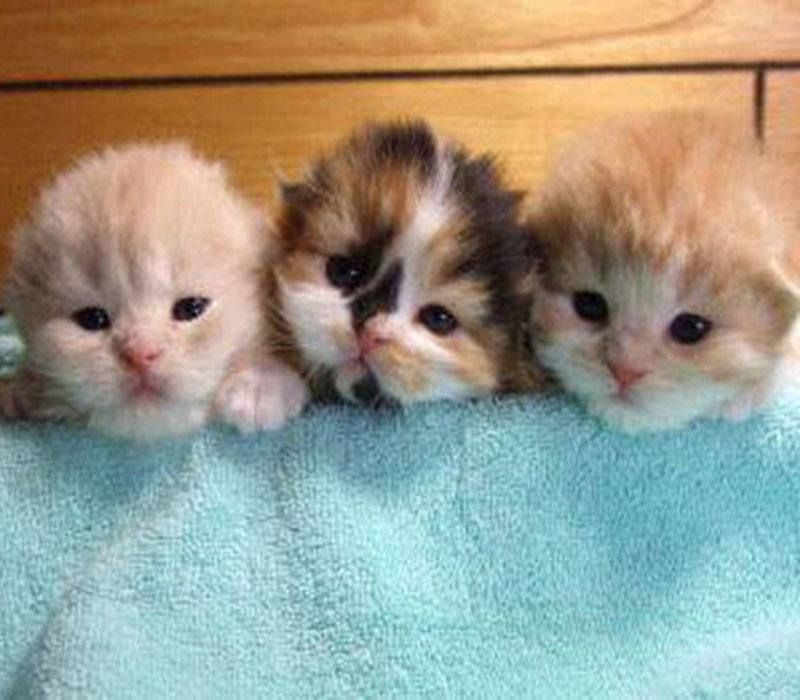 Precious Little Baby Kittens Kittens Cutest Cute Baby Animals Baby Cats