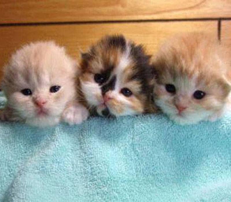 Precious Little Baby Kittens Kittens Cutest Cute Baby Animals