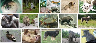 Oppitori: Lauseharjoituksia yleisillä eläimillä