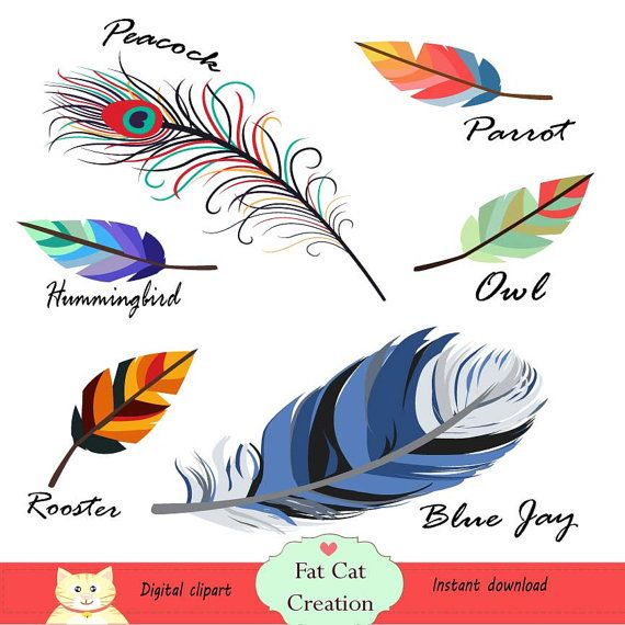 Floating feathers clipart digital illustration by FatCatCreation