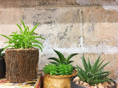 High Light Vs. Low Light Succulents. What! This Is A Group Of Low Light  Succulents. They Like Morning To Late Afternoon Light. Learn More About How  To Care ...