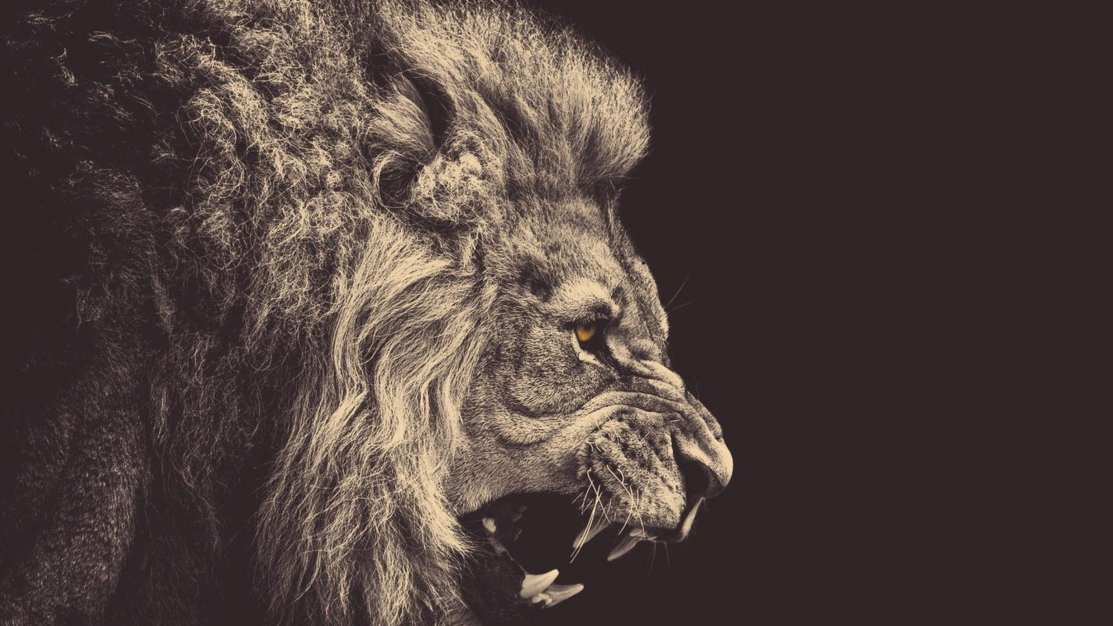 lion wallpaper e98 | hd wallpaper, blue wallpaper, abstract