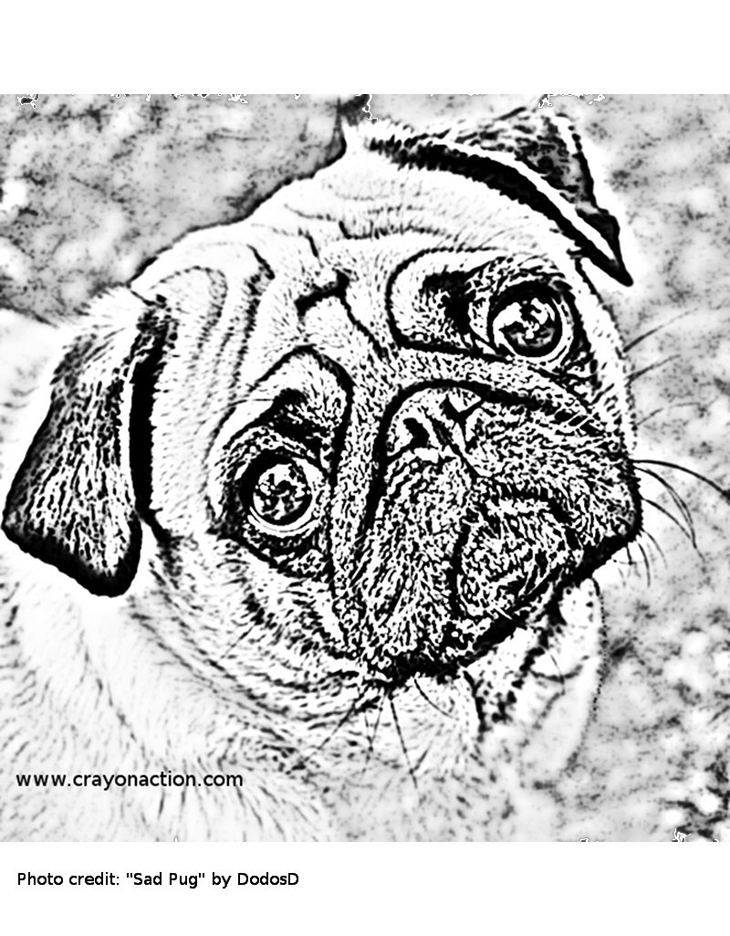 Pugs just look like they might be sad practically all the for Coloring pages of pugs