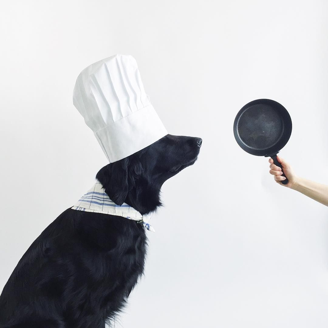 Cooking for your dog watch out for these nutrient
