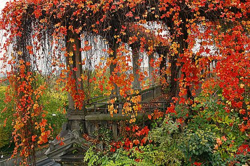 Autumn Vines, Weinberg, Germany