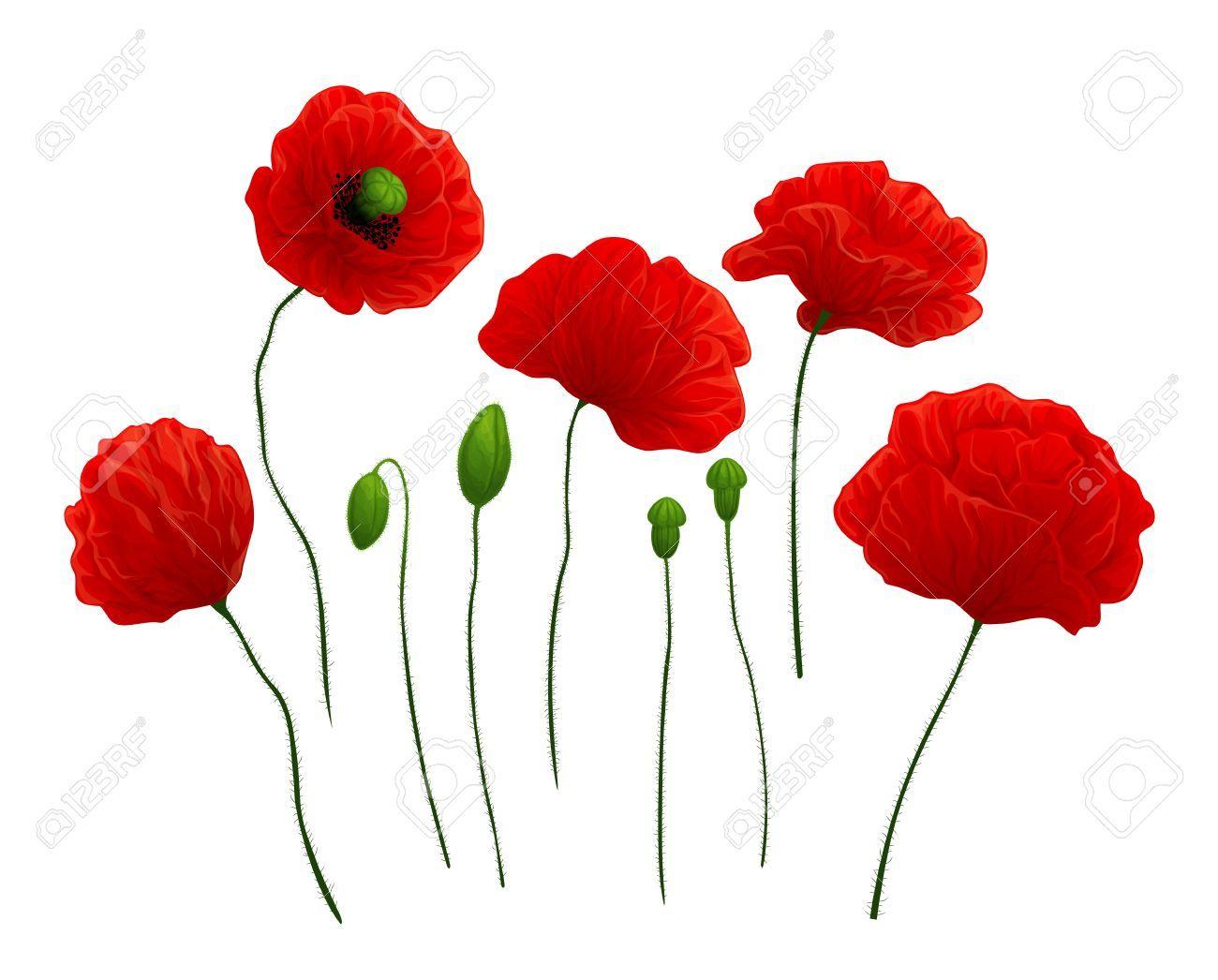 Stock Photo Red Poppies Free Art Prints Poppies