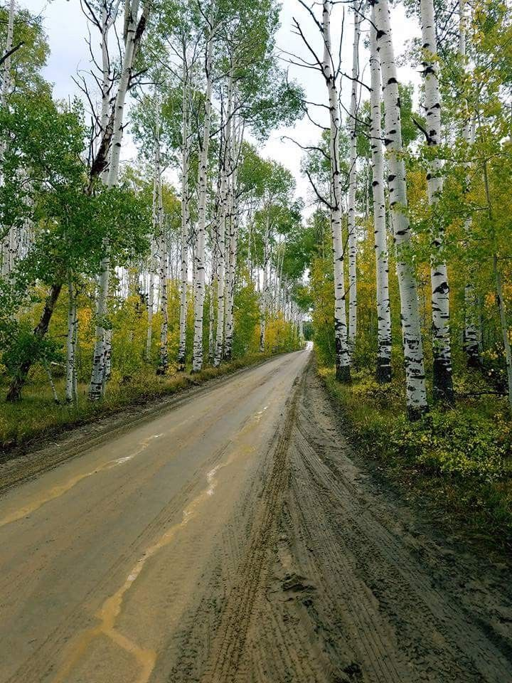 Aspen Alley, Wyoming. Wyoming, Country roads, Vacay