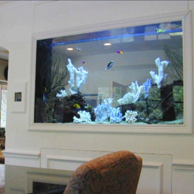 Wall Fish Tank Images