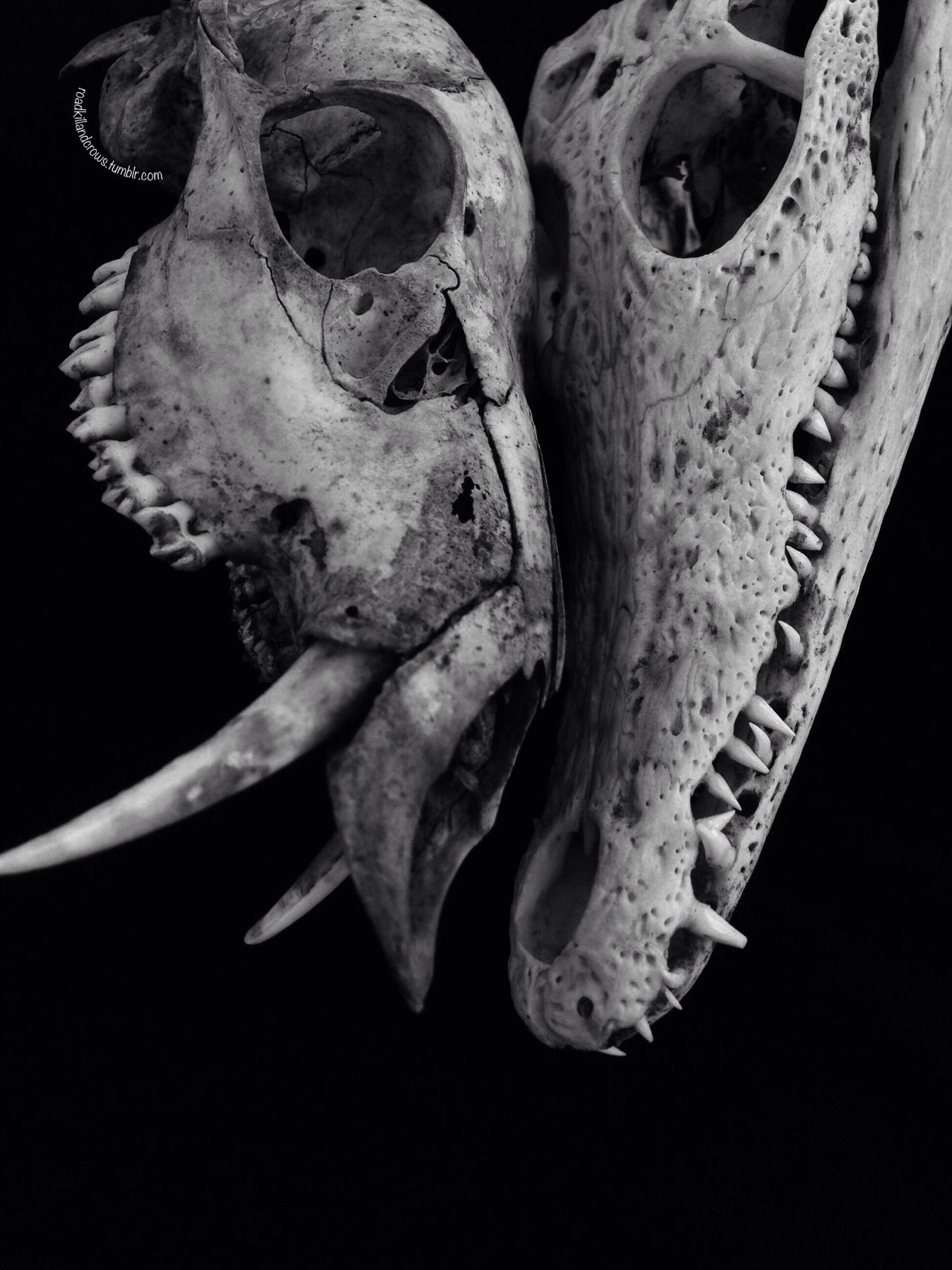 Occultism — | metal skull | Pinterest | Huesos