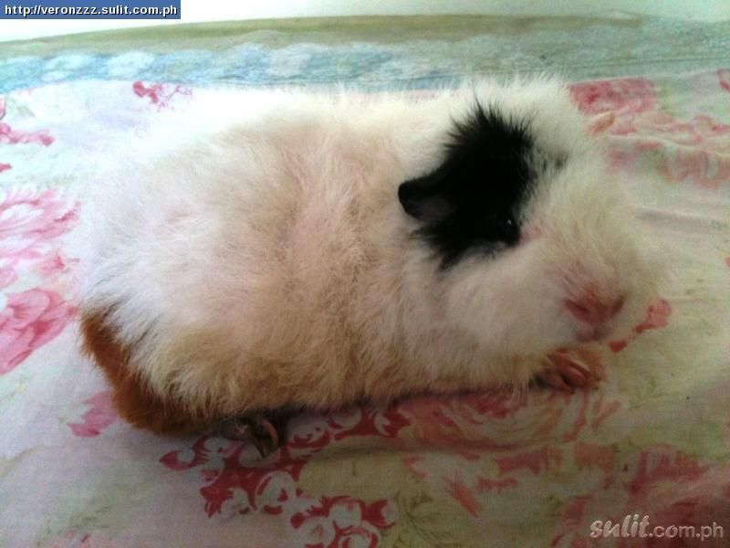 Pin On New Adorable Piggy S Ever