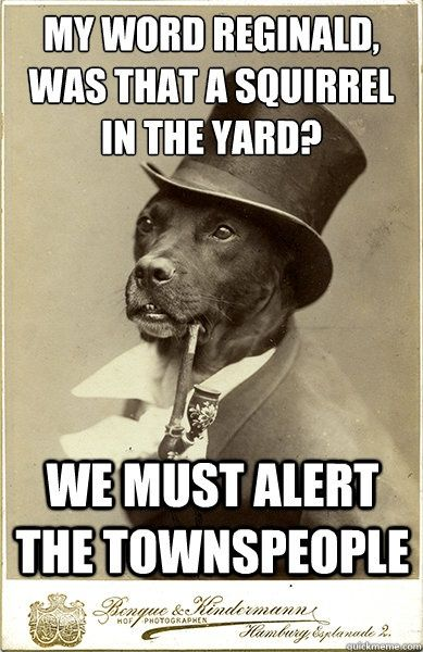 6d5b228029031a606767074ba04e4e58 my word reginald was that a squirrel in the yard we must old