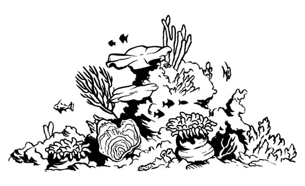 Coral Reef Fish Tank Coloring Pages Kids Play Color Coral Reef Drawing Coral Reef Art Coral Drawing