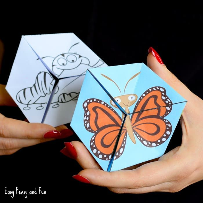 Butterfly Life Cycle Paper Toy Craft - Flextangle Template ...