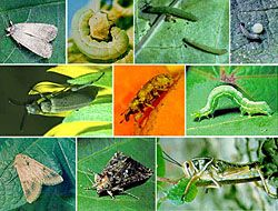 Enjoyable Plant Pest Identification Aid As Well As Beneficial Garden Home Interior And Landscaping Ferensignezvosmurscom