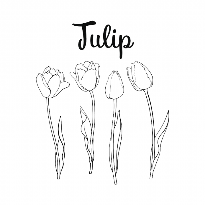 Hand Drawn Set Of Side View Black And White Open And Closed Tulip Flower Sketch Tattoo Drawings In 2020 How To Draw Hands Drawing Set Tulip Drawing