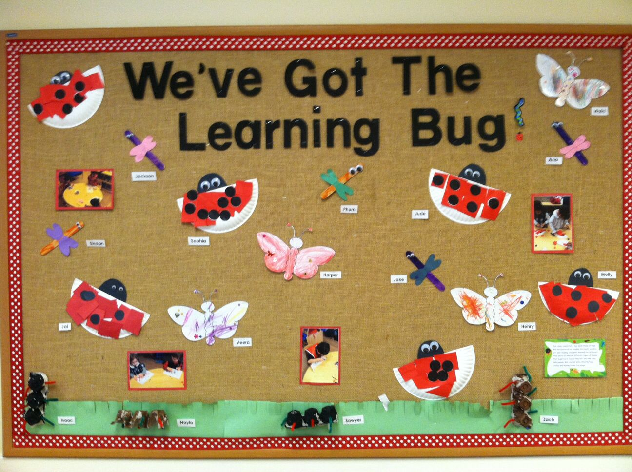 Bugs Bulletin Board