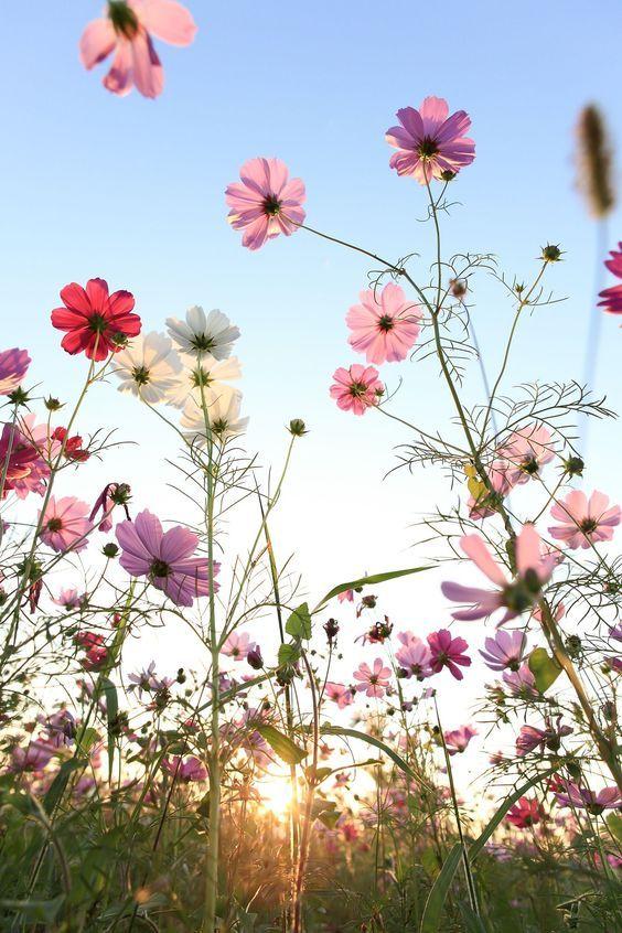 Pin von MYLOMA auf spring | Pinterest | Wunderschön, Hintergründe ...