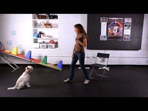 How To Train Your Dog To Jump Into Your Arms Dog Hacks Dog