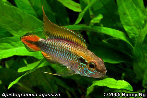 Fischforum