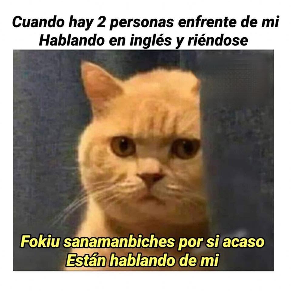 Spanglish Time Memes Divertidos Meme Gracioso Chistes Graciosos De Animales
