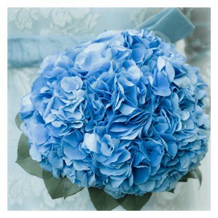 I colori della sposa per il 2015? ....i delicati, tutti i colori che la natura ci suggerisce, l'azzurro delle ortensie ....per istinto o per passione.......perché l'abito da sposa più bello e' quello che nasce da chi lo crea con il cuore.... Alessandro Tosetti www.tosettisposa.it Www.alessandrotosetti.com #modasottolestelle #cnms #lugano #abitidasposa #wedding #weddingdress #tosetti #tosettisposa #nozze #bride #alessandrotosetti #fashion #sfilate