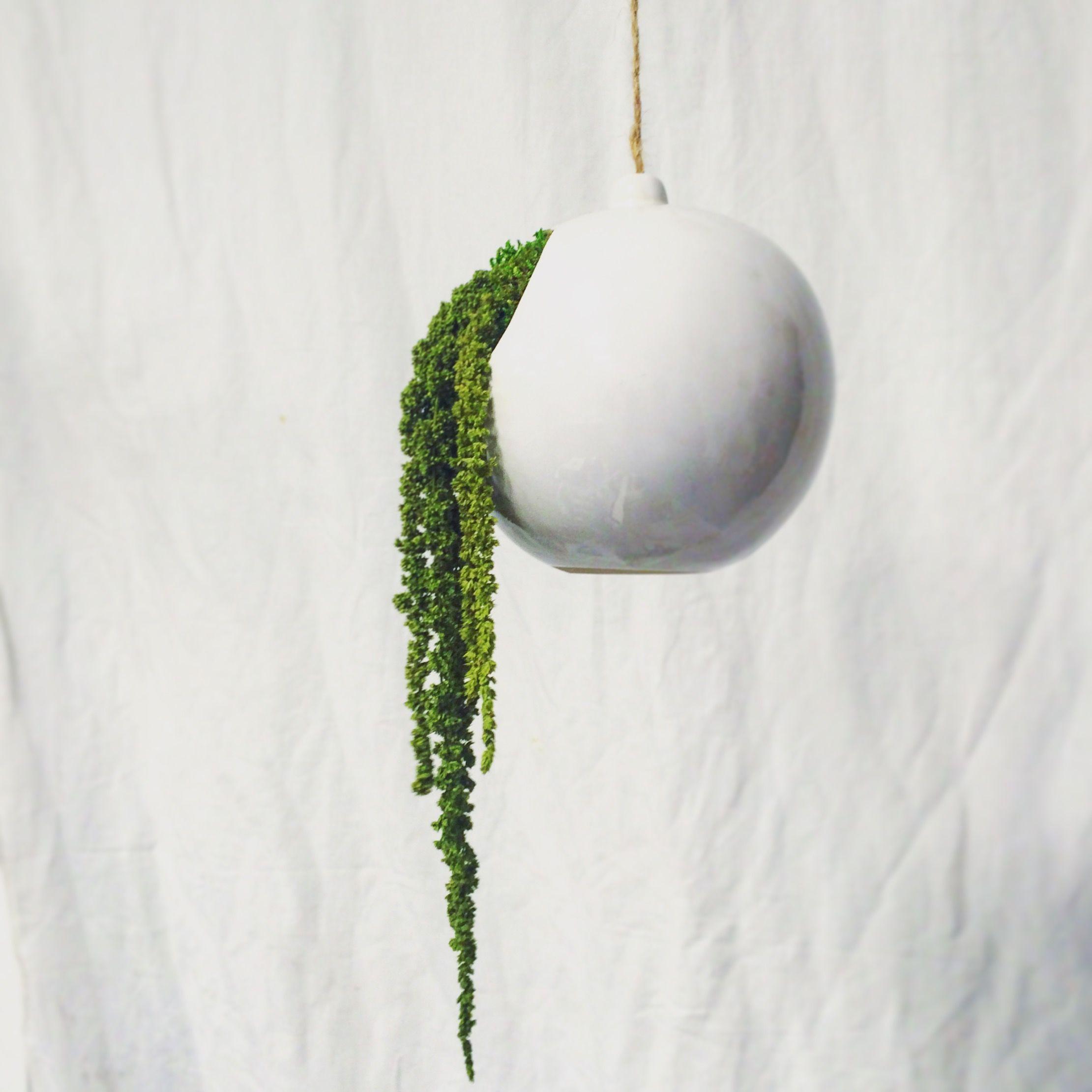 Design végétal, plantes stabilisées. Création et réalisation