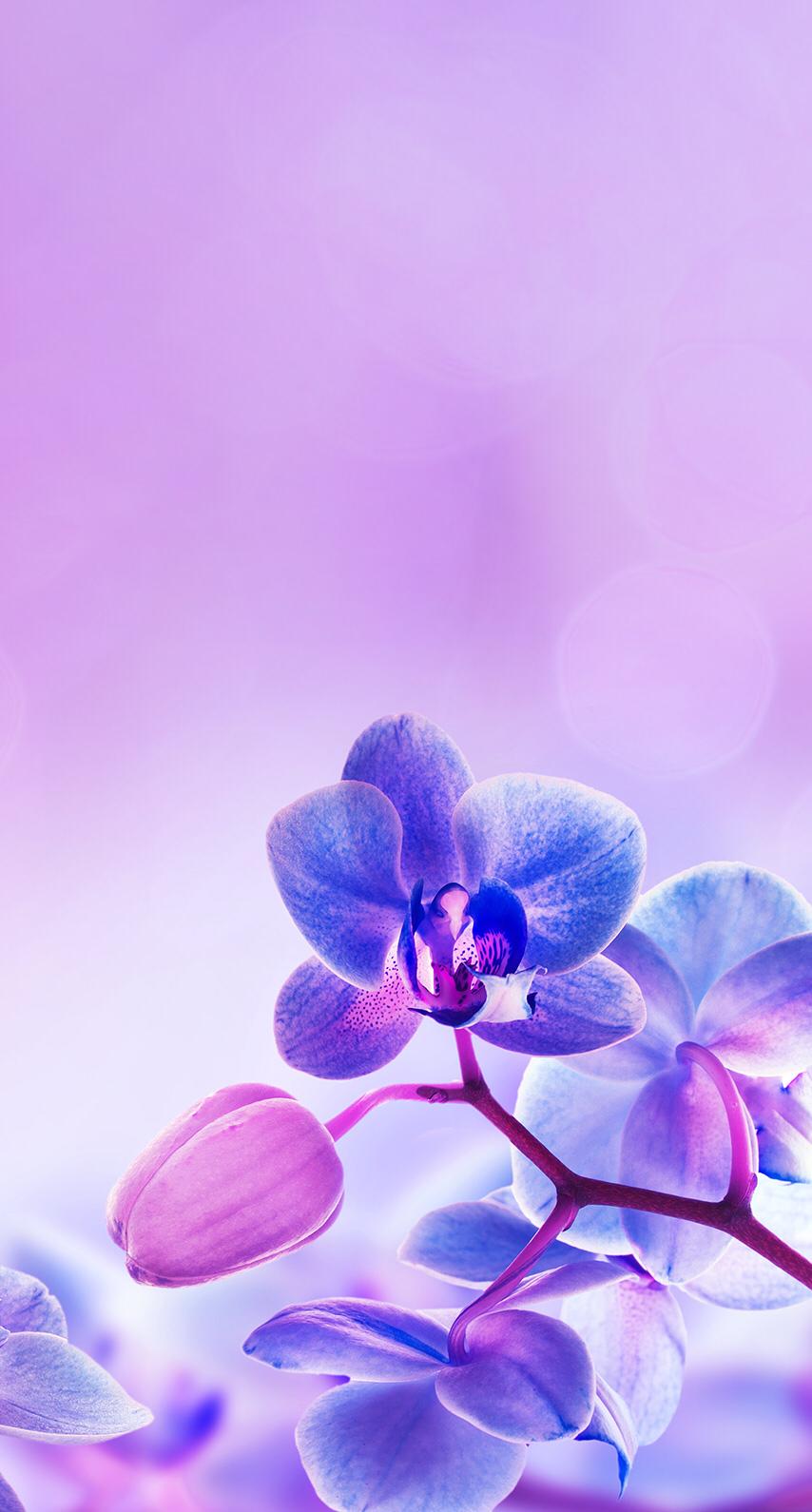 Pin By Brittany Buck On Purple Purple Flowers Wallpaper Orchid Wallpaper Flower Wallpaper