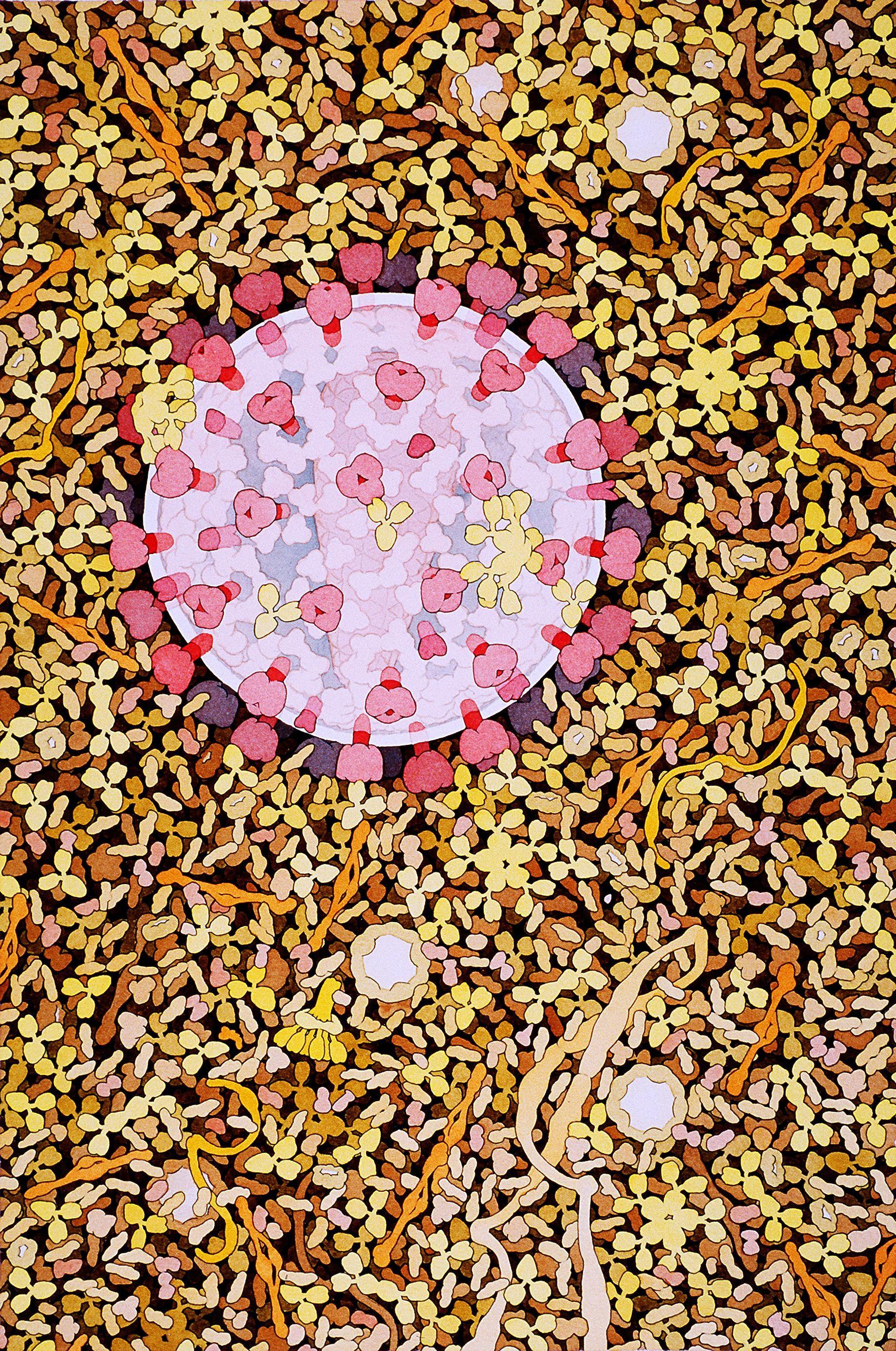 Molecular Biology Paintings By David Goodsell Biology Art Art