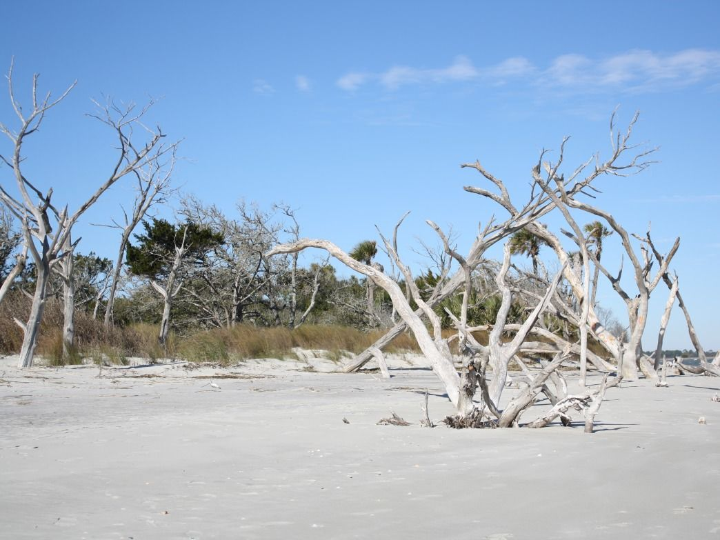 Folly Beach is a favorite spot for surf fishing.