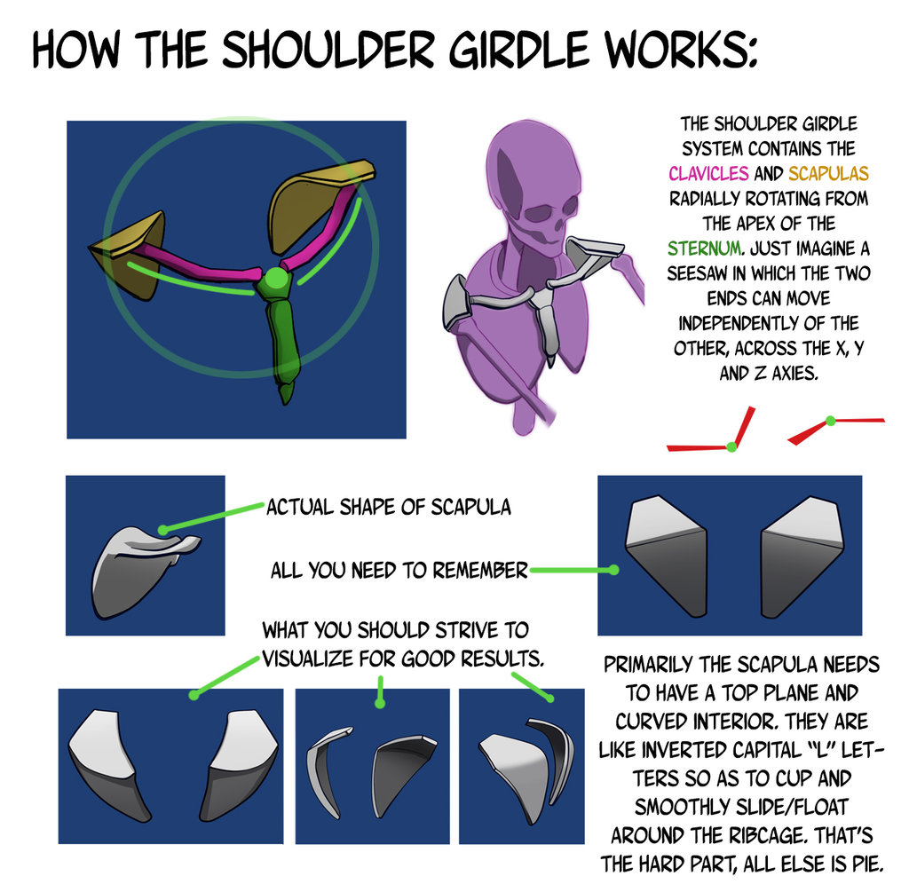 cartoonbrew: Shoulder Girdle Construction Notes... - ambitions like ...