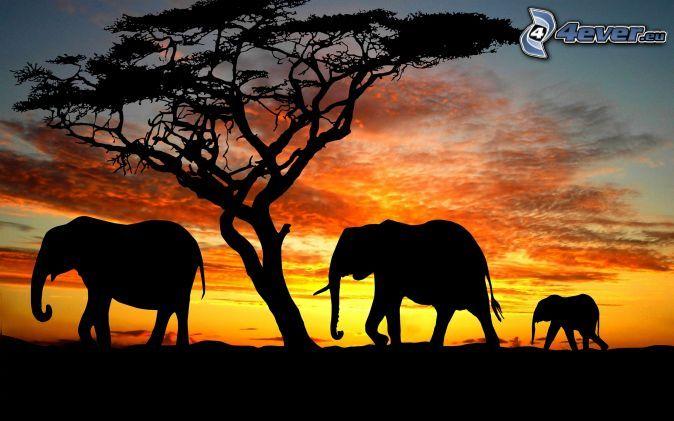 Sonnenuntergang In Der Savanne Tier Silhouette Afrikanischer