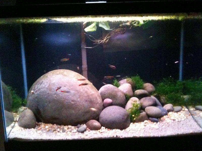 Great Rock Work Betta Aquarium Aquarium Fish Cichlid Aquarium