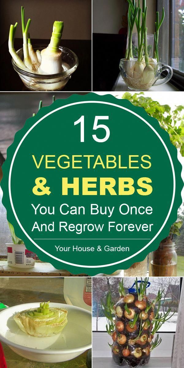 Photo of 15 Vegetables & Herbs You Can Buy Once And Regrow Forever
